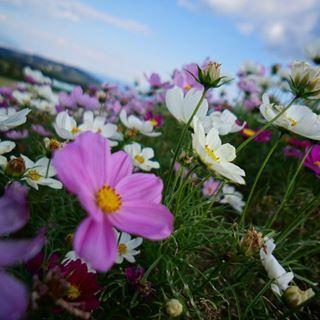 San Flower